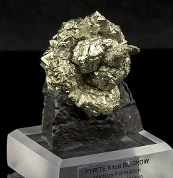 Pyrite Filled Infaunal Burrow