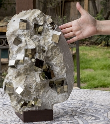 Enormous Pyrite with 36 Cubes