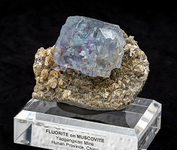 Phantom Fluorite on Muscovite