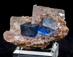 Double Blue Halite Cubes on Sylvite
