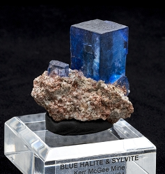 Blue Halite Cubes on Sylvite