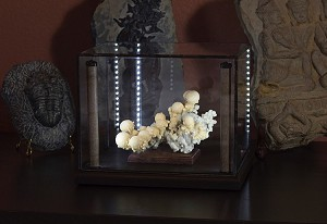 "Lighted Display Case - 8x6x6"" - Java"